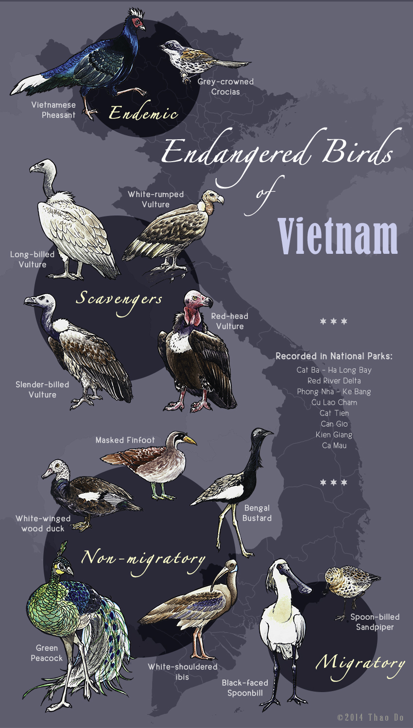 Endangered Birds of Vietnam _ Vertical Version