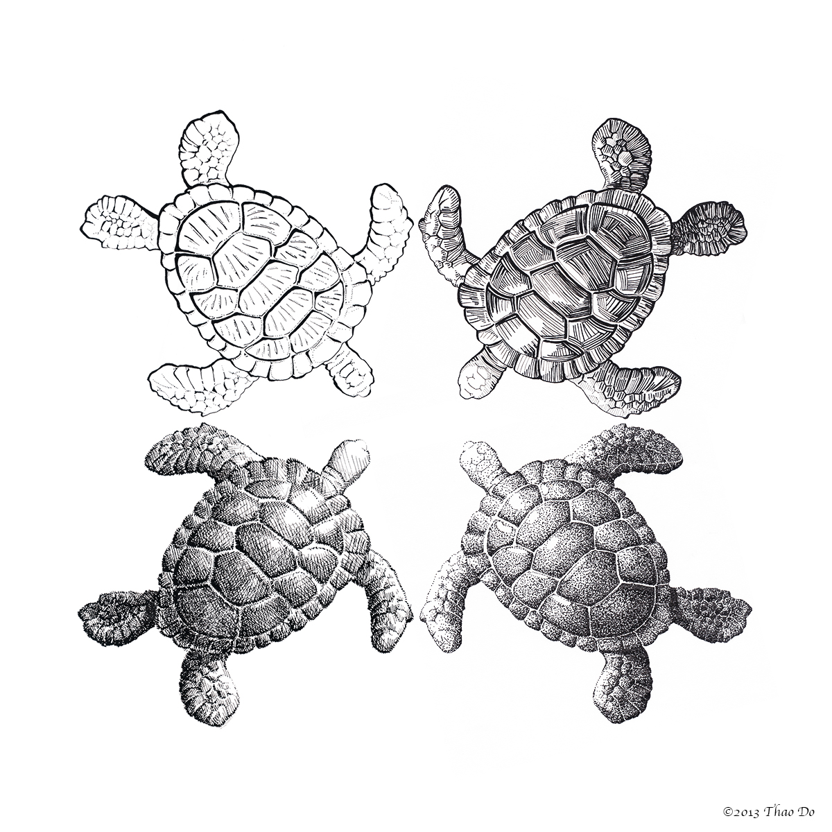 Turtle Together